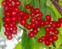 Список растительных адаптогенов— управляем стрессом сами