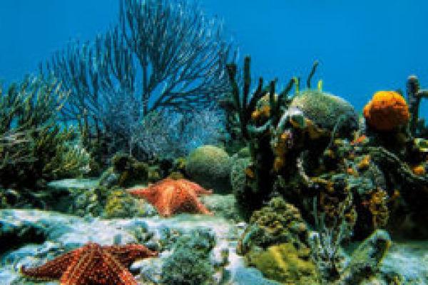 Любопытные факты о съедобных водорослях