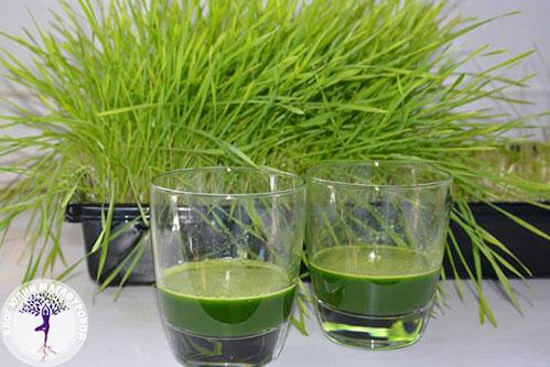 Витграсс в стаканчиках и зелень
