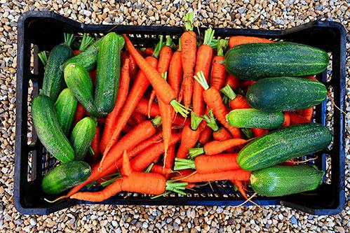 Огурцы и морковь в ящике